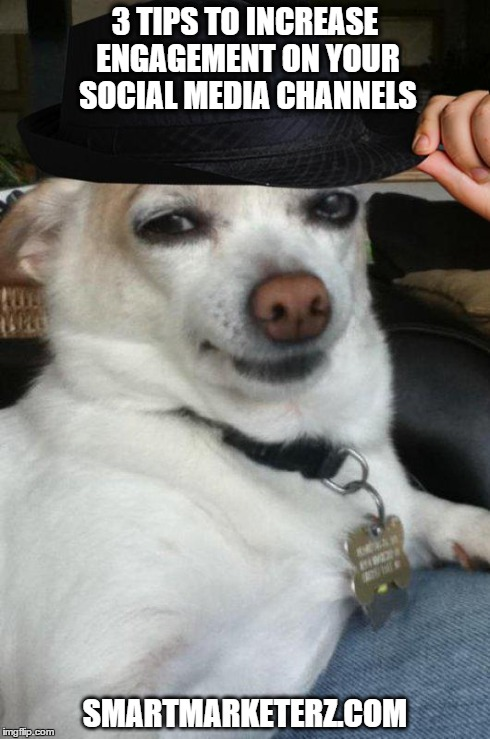 funny dog with hat